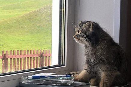 Даша смотрит в окно