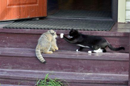 Даша играет с кошкой