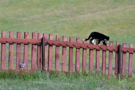 Кошка гуляет сама по себе, а Даша наблюдает