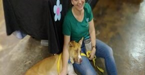 Волонтёры были удивлены возврату собаки в приют
