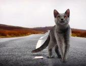 Почему кошки находят дорогу домой