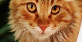 Хозяйка кота уехала подлечиться и оставила животное дома
