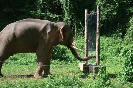 слон видит свое отражение