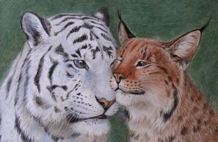 Тигр и рысь