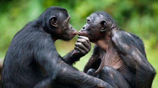 Миролюбивые обезьянки