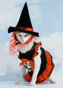 кошка в костюме ведьмы на хэллоуин