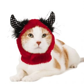 кот в шапке чёрт