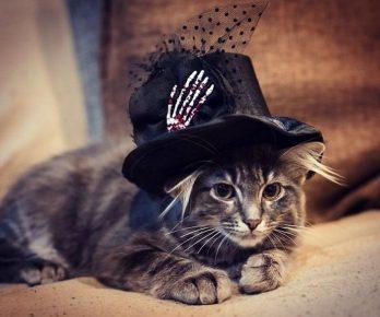 кот в чёрной шляпе