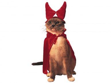 кот с красными рогами в мантии