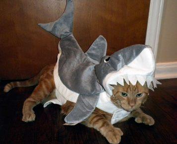 кот в костюме акулы