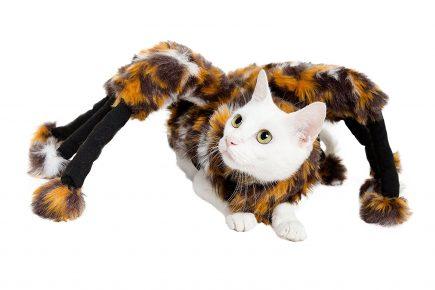 костюм паука для кота
