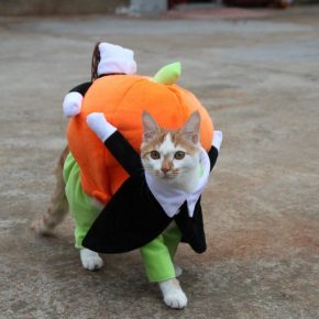кот в костюме тыквы