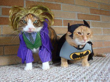 коты супергерои