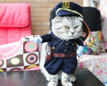 кот в полицейской форме