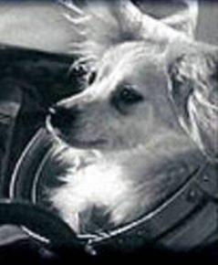Собака Козявка