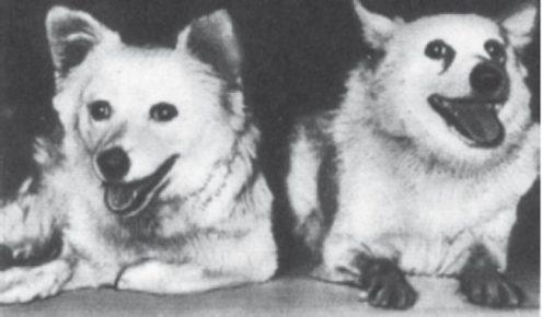 Собаки Кусачка и Пальма