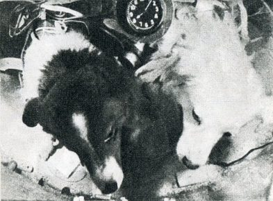 Пёстрая и Белянка