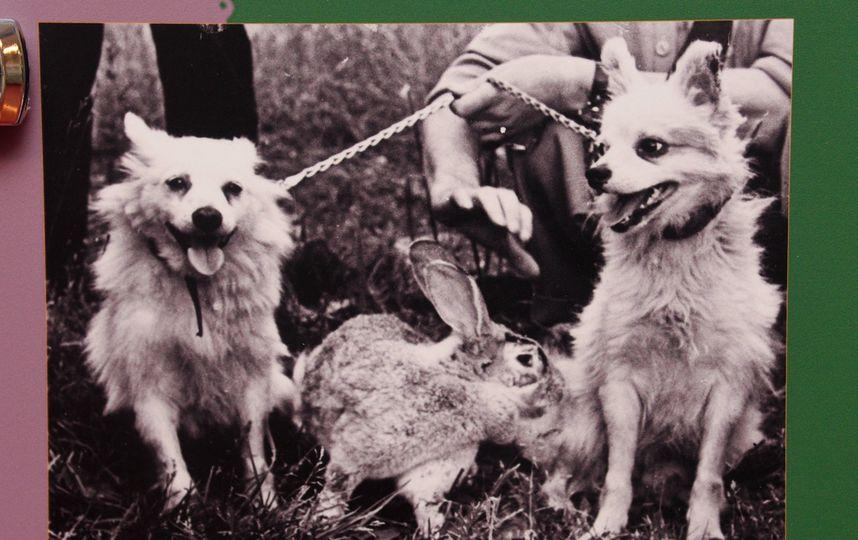 Отважная, Снежинка и кролик Марфушка