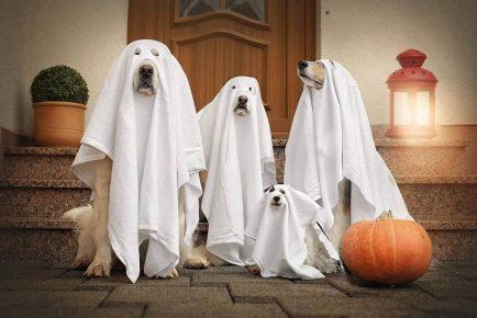 Собаки в костюмах привидений