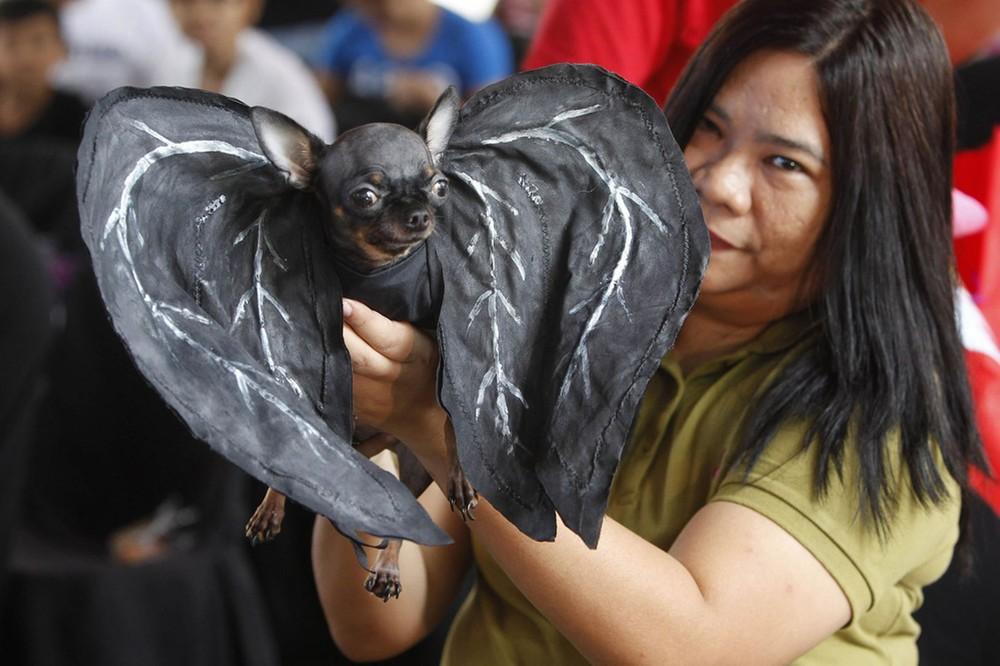 Костюм летучей мыши для собаки, сделанный своими руками