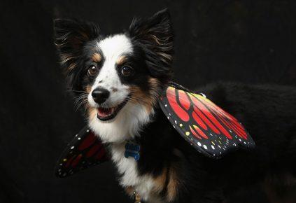 Собака в образе бабочки