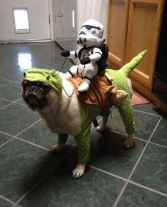 Собака в жутком костюме для Хэллоуина