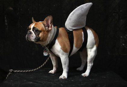 Пёс в костюме акулы