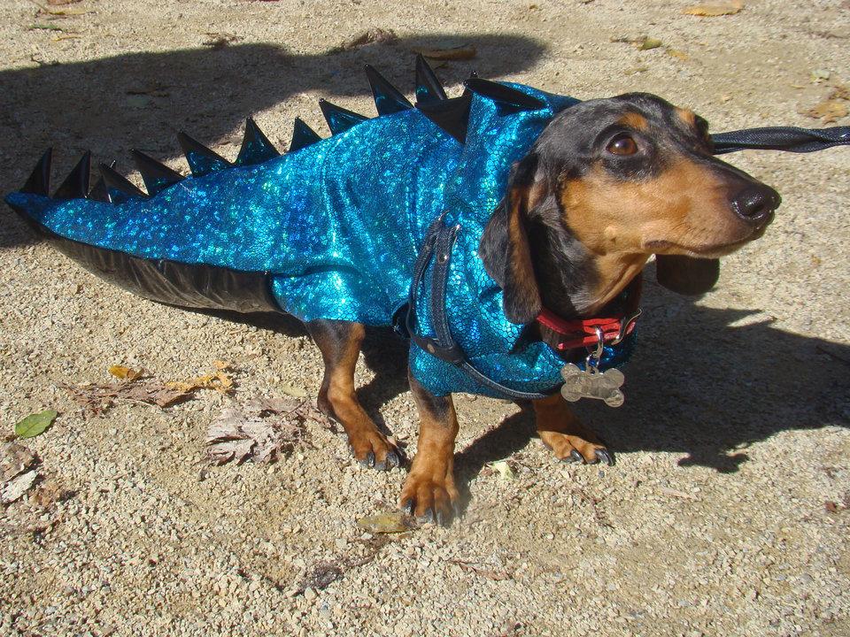 Такса в костюме дракона
