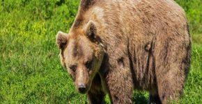 Медведь в китайской провинции провалился в канал ГЭС