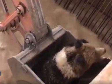 В канале ГЭС застрял медведь