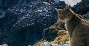 Хранитель гор - усатый смотрящий