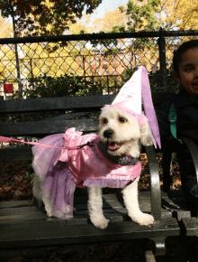 Собака в костюме волшебницы