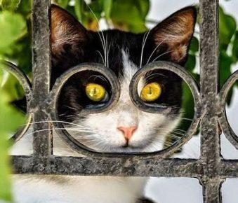 Кот примеряет очки