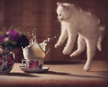 левитация кота у чашки молока