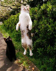 Кот, парящий в воздухе