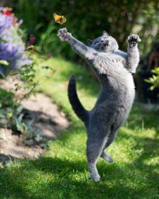 Танец кота с бабочкой