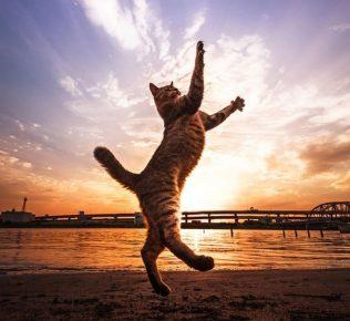 Танцы кота на закате