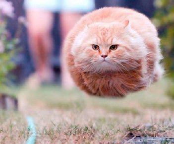 Кот — снаряд