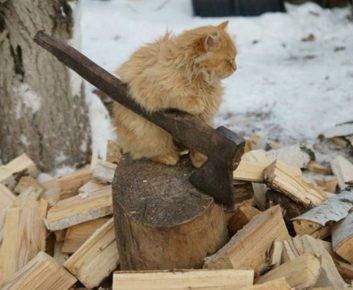 Котик колет дрова