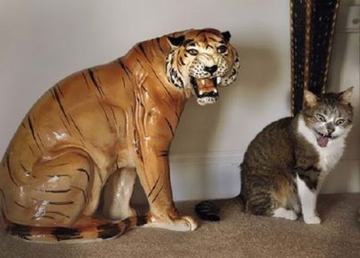 Кот подражает тигру