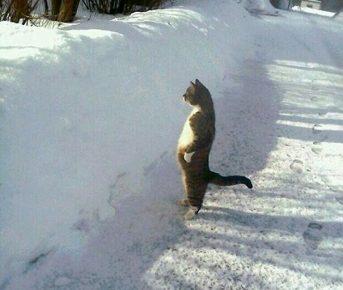 Котик осматривает свои владения