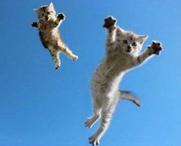 Парящие в небе котята