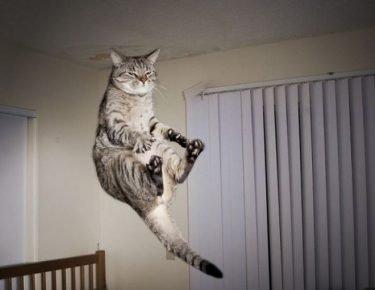 Невозмутимый котик