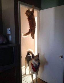 кошка прячется от собаки в дверном проёме
