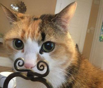 Котик нашел себе усы