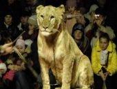 Львица набросилась на малолетнюю девочку в цирке