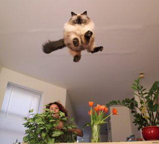 Уроки левитации для кота