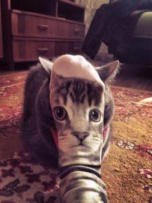 кошка прячется за носком