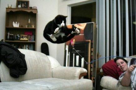 Кот парит в воздухе