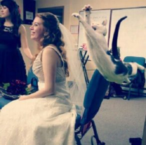 Кот летит к невесте